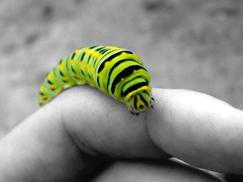 Oruga verde sobre mano