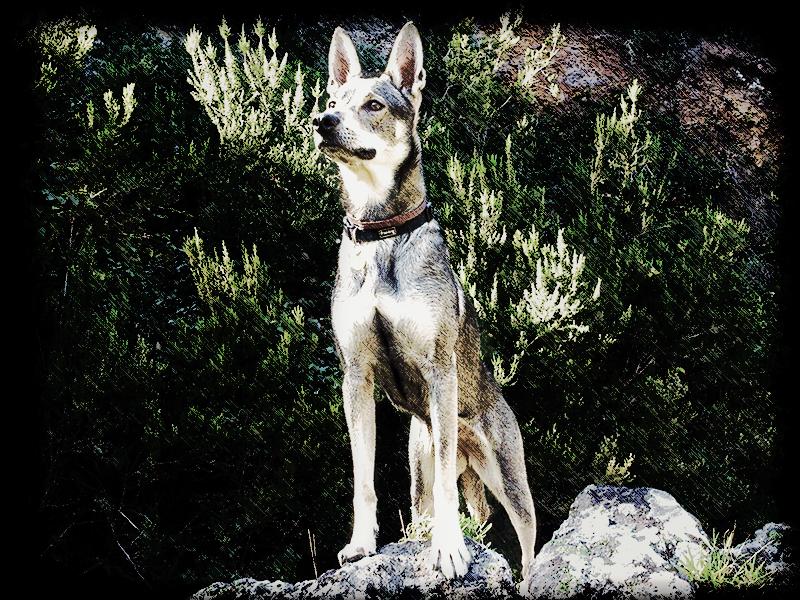 Foto de perra mirando al infinito para el relato Hara