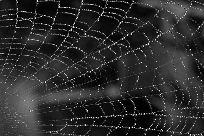 Tela de araña para ilustrar el relato La visitante nocturna